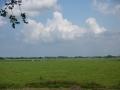More Holand